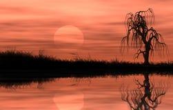 arbre ripicole reflété par lune Photos libres de droits