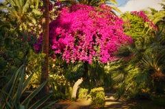 Arbre rose Image libre de droits