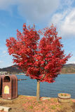 Arbre rouge Photos stock