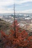 Arbre rouge au-dessus de Tbilisi Image stock