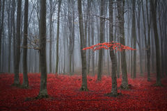 Arbre rouge dans une forêt brumeuse d'automne
