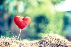 Arbre rouge de coeur Photographie stock