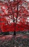 Arbre rouge grand dans le paysage noir et blanc NYC Photo libre de droits