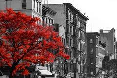 Arbre rouge sur la rue noire et blanche de New York City Photos libres de droits