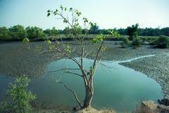 Arbre s'élevant dans le lac marécageux Image libre de droits
