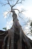 Arbre s'élevant sur le temple de Ta Prohm Angkor Photographie stock