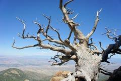 Arbre s'élevant sur une montagne rocheuse Photographie stock libre de droits