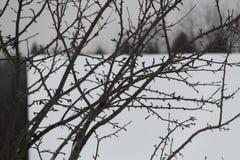 Arbre sans feuilles image libre de droits