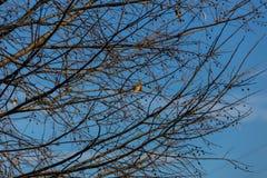 Arbre sans feuilles Images stock