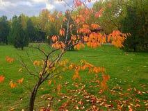 Arbre sans feuilles Photo libre de droits