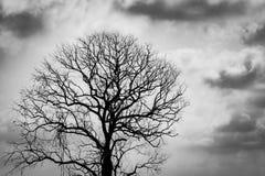 Arbre sans feuilles de silhouette Arbre mort de silhouette sur le fond dramatique fonc? de ciel et de nuages pour effrayant ou la image stock