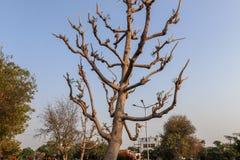 arbre sans feuilles en parc avec l'herbe verte et le ciel bleu photographie stock libre de droits