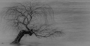 Arbre sans feuilles solitaire photo libre de droits