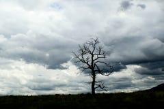Arbre sans feuilles solitaire sur l'horizon avec les nuages de tempête turbulents dramatiques à l'arrière-plan image libre de droits