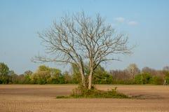 Arbre sans feuilles photographie stock libre de droits