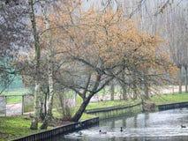 Arbre scénique avec des couleurs d'automne le long d'un canal néerlandais photos libres de droits