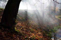 Arbre scénique dans la scène d'automne Image libre de droits