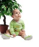 arbre se reposant vert de chéri dessous Photographie stock