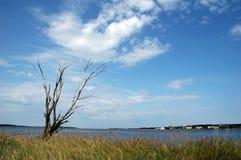 arbre sec images stock