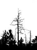 arbre sec Photo libre de droits