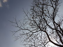 Arbre sec Photo stock