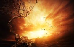 Arbre sec au-dessus de ciel orageux Images libres de droits