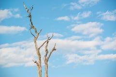 Arbre sec avec le ciel bleu horizontal Photographie stock
