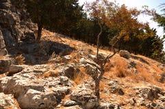 Arbre sec dans des roches d'argile Photo stock