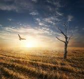 Arbre sec dans le domaine d'autumnn Photo stock