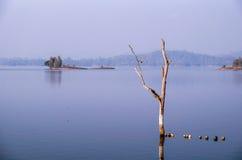 Arbre sec dans le lac Image stock