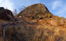 Arbre sec dans les montagnes Images libres de droits