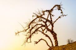 Arbre sec dans un désert Images stock