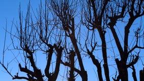 Arbre sec et ciel bleu Photo libre de droits