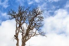 Arbre sec isolé en Horton Plains photographie stock libre de droits