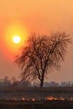 Arbre sec isolé pendant le burning d'herbe de ressort photo libre de droits
