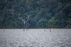 Arbre sec mort dans le barrage photographie stock