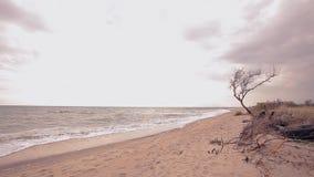 Arbre sec par la mer Arbre seulement mort sans feuilles contre la mer banque de vidéos