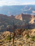 Arbre sec près d'arbre au-dessus de jante de sud de Grand Canyon, Arizona, USA Images libres de droits