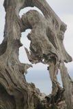 Arbre sec, sculpture naturelle photographie stock