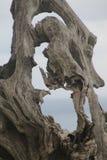 Arbre sec, sculpture naturelle photos stock