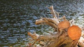 Arbre sec sur le lac clips vidéos