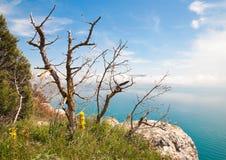 Arbre sec sur une falaise au-dessus de la mer Photographie stock libre de droits