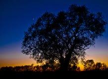 Arbre silhouetté au coucher du soleil Photos stock