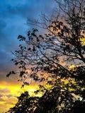 Arbre silhouetté contre le beau coucher du soleil Photos libres de droits