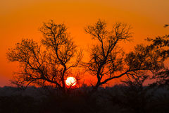 Arbre silhouetté contre un ciel coloré 6 photo stock