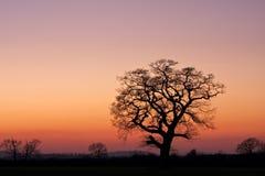 Arbre silhouetté dans un domaine au coucher du soleil Image stock