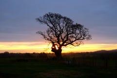 Arbre silhouetté par le soleil de début de la matinée se levant au-dessus des bas du sud photos stock