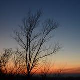 Arbre silhouetté sans feuilles à l'arrière-plan crépusculaire, gradient de couleur image stock