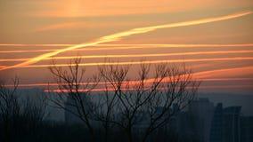 Arbre silhouetté sans feuilles à l'arrière-plan crépusculaire, gradient de couleur photo libre de droits
