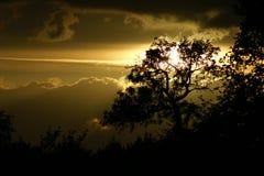Arbre-silhouette Image stock